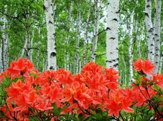 八千穂高原花木園