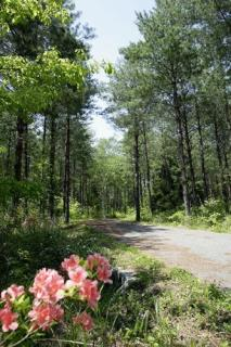 森林セラピーR セラピーロード 信州大芝高原みんなの森