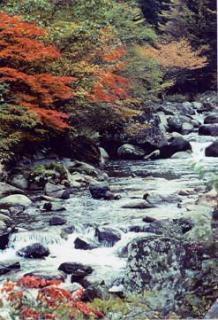 小戸名渓谷の紅葉