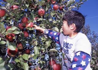 喬木村・リンゴの樹オーナー農園