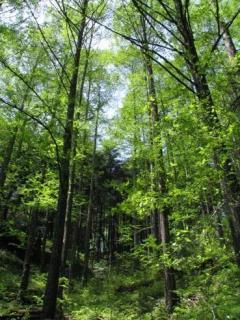 城山史跡の森