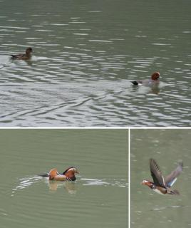 生坂ダム湖の水鳥