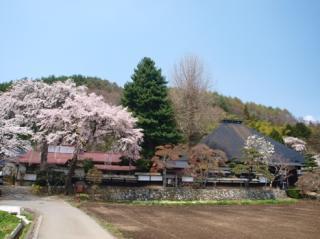 光輪寺のしだれ桜