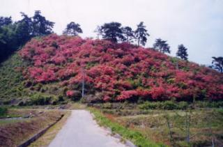 城山つつじ公園
