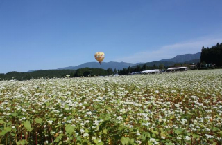 椛の湖そばの花まつり