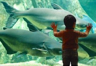 岐阜県世界淡水魚園水族館(アクア・トトぎふ)