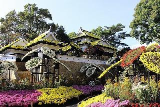 楽寿園 菊まつり