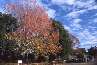 岩本山ハイキングコース