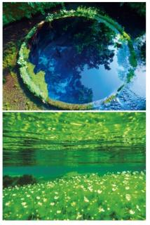 柿田川湧水群