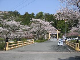 小國神社桜まつり