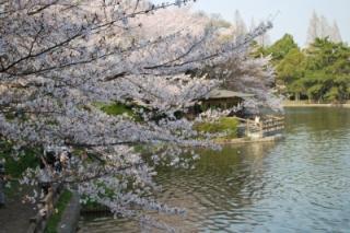 刈谷の桜まつり