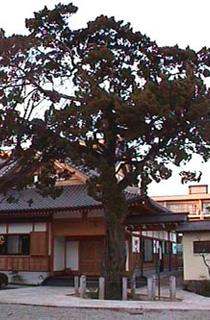 萬福寺的ibuki