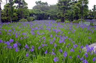 八橋kakitsubata園