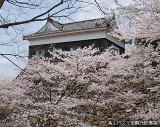 亀山城桜まつり