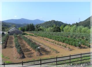 体験型観光農園ローザンベリー多和田