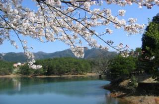 三段池公園の桜