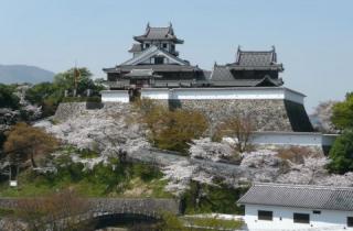 福知山城の桜
