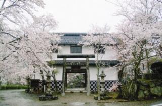 山家城址の桜