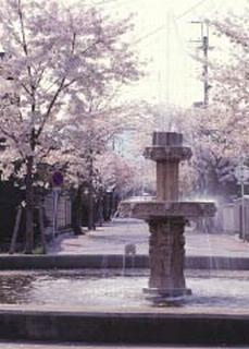 櫻花的直徑