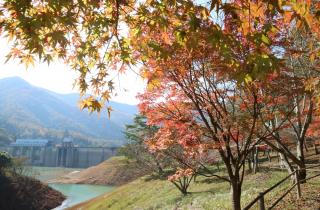 大野ダム公園の紅葉
