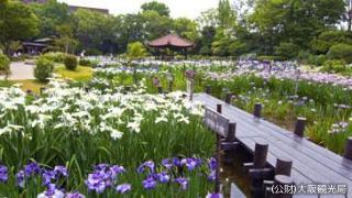 城北菖蒲園開園