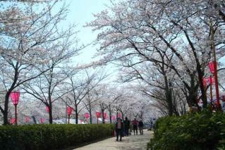 摂津峡桜まつり