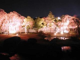 好古園夜桜会