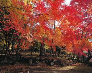 瑞光寺(兵庫県多可町)
