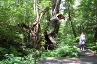 但馬高原植物園凈川平