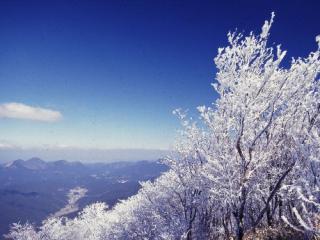 三峰山 霧氷まつり