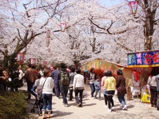打吹公園の桜・ツツジ