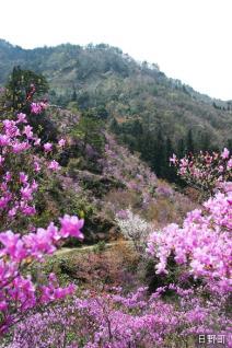 滝山公園つつじまつり