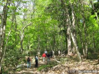 森林セラピーゆりかごの小径