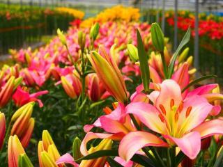 花の駅せら(植物鑑賞)