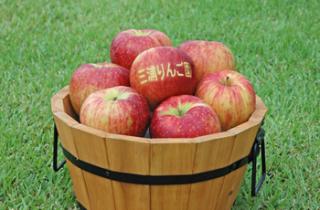 三浦りんご園/りんご