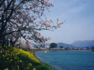 Hashimoto riverside / cherry tree