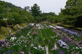 Kintai-kyo Bridge Iris Festival★35208ba2212097676