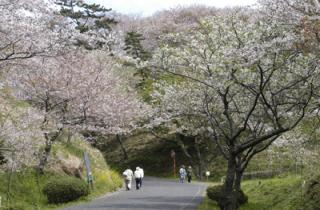 竜王山公園/さくら