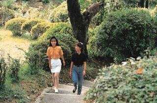 若山公園/つつじ