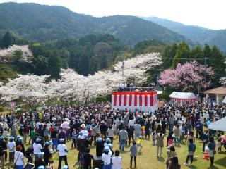 三島公園桜まつり