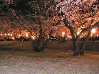 すすきケ原入野公園 春まつり