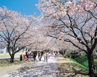 桜まつり(鏡野公園)
