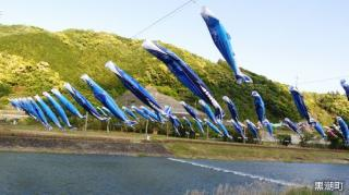 River Hanging Over Bonito and Carp Streamer