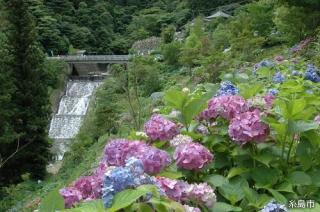 白糸の滝あじさい祭り