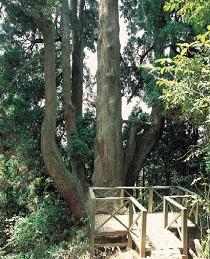 大和の森遊歩道