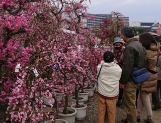 くまもと春の植木市