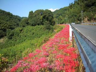 里山の秋(彼岸花)