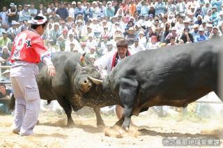全島一闘牛大会