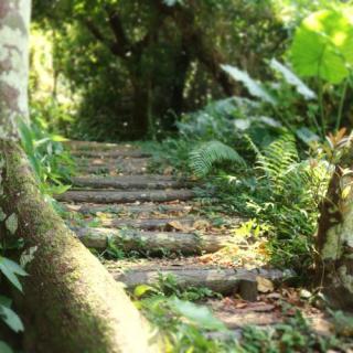 ホロホローの森(具志頭遊歩道)