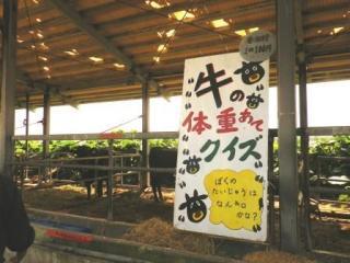 黒島牛まつり